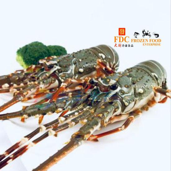Picture of LOBSTER <br> 龙虾 <br>(1.0-1.2kg)