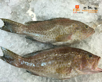 Picture of KERAPU S <br>上石班 <br> (1PCS/550g )