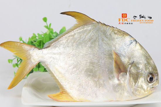 Picture of BAWAL EMAS / 金鲳 <br> ( 650g )