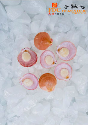 Picture of HAIF SHELL SCALLOP <br> 半壳带子<br> (1PKT / 500g )